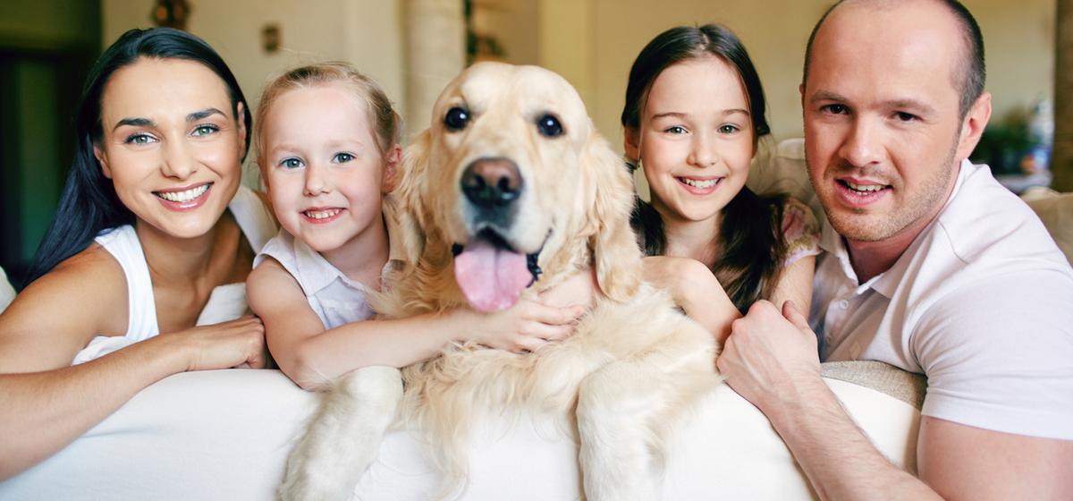 Despacho de Abogados Madrid, Pozuelo de Alarcón. Que hacer con el patrimonio despues de un divorcio, quien se queda con la mascota, el perro o el gato.